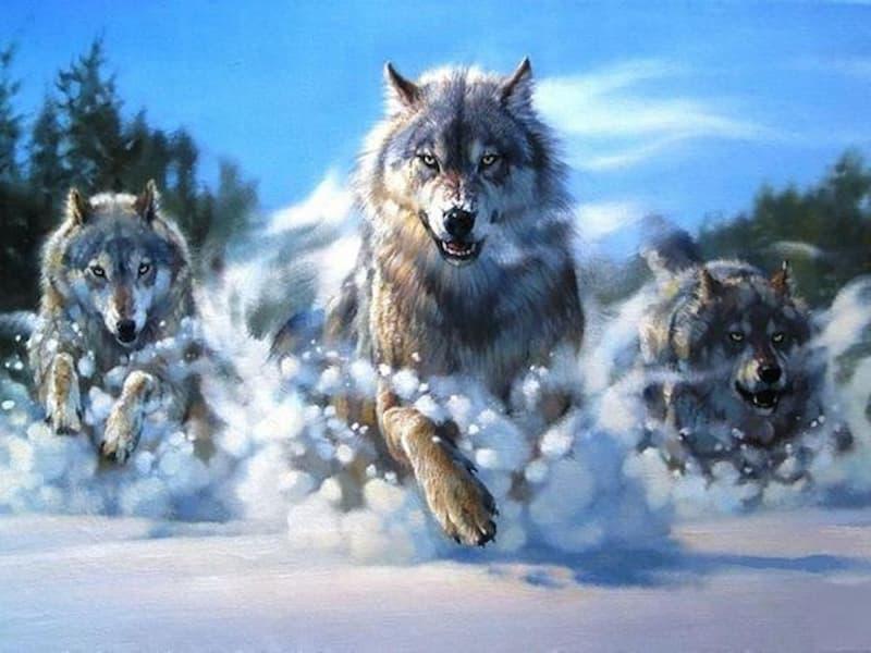 giấc mơ thấy sói